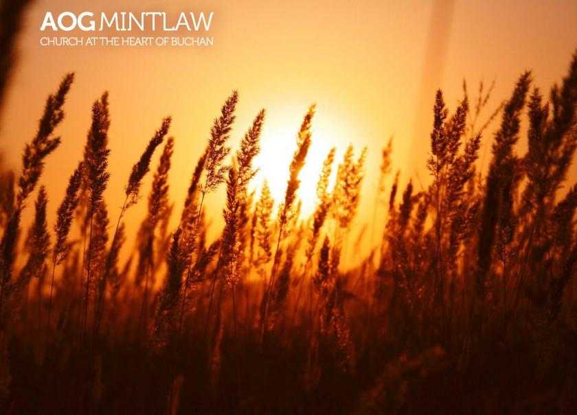wheatsun7